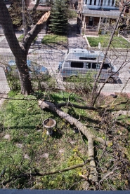 Downed limb from above.