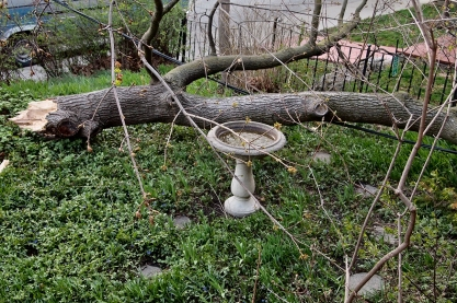 Downed limb beside birdbath.