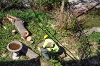 Collecting the cut wood.