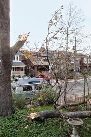 Broken tree and downed limb.