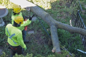 Workers discussing how to cut limb.