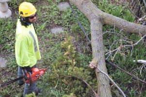 Worker assessing the approach, wire under limb.
