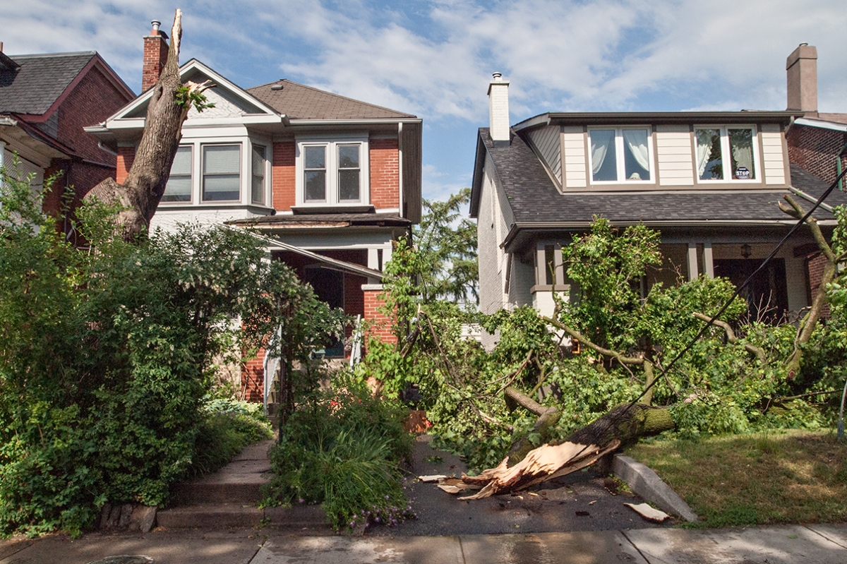 Tree down in front of two houses.