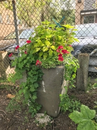 Tall laneway planter with vines and flowers.