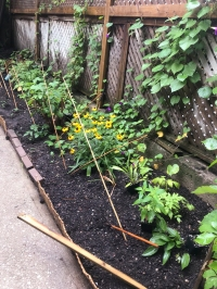 Flower border with vines and bamboo stakes.